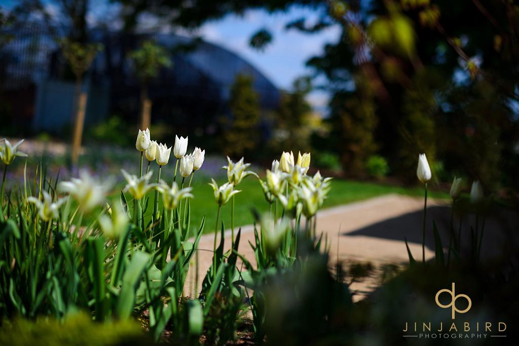 garden-flowers-bassmead-manor